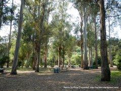 laurel loop trail-picnic area