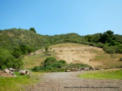 kennedy grove