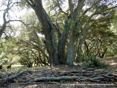 black oak loop trail