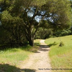 black oak loop trail