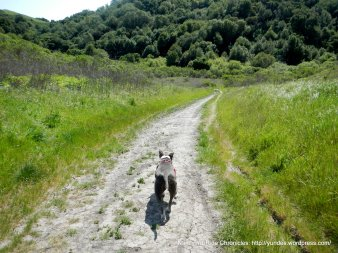 black oak trail