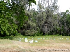 pleasants valley bee hives