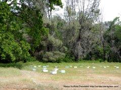 pleasants valley bee hives