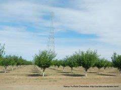 putah creek orchards