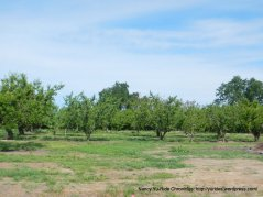 putah creek orchards