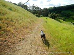 bull valley trail