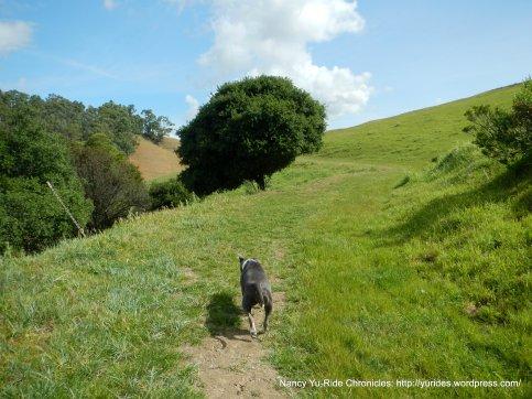 multi-use trail