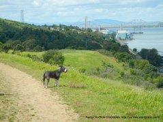 carquinez overlook loop trail