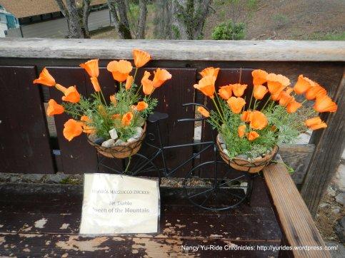 monica mazzocco zucker memorial