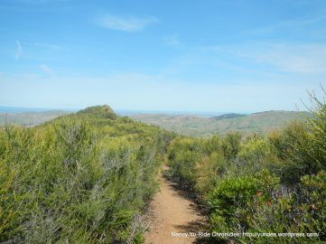 eagle peak trail-dense chaparral