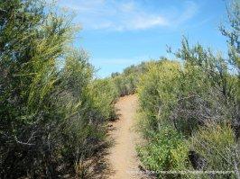 eagle peak trail-dense chaparral