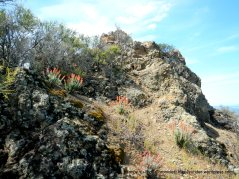 eagle peak trail-indian paintbrushes