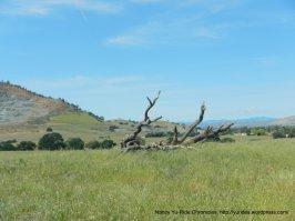 diablo grasslands
