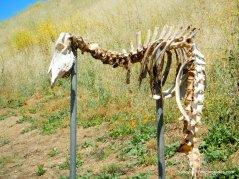 franklin canyon skeleton