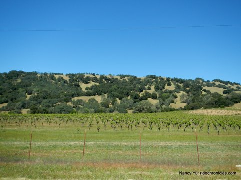 chiles valley