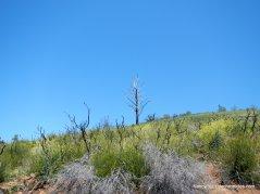 summit rd-regrowth