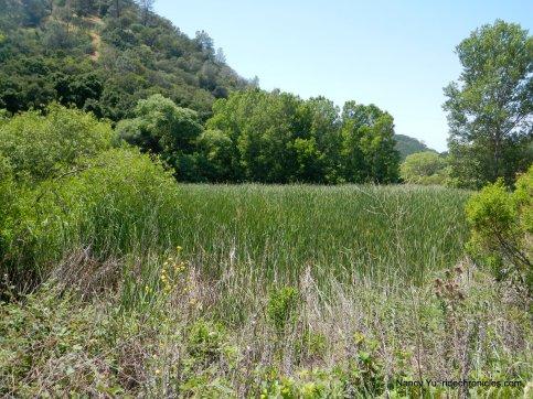 pine pond
