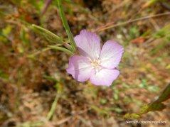 pink spring flower