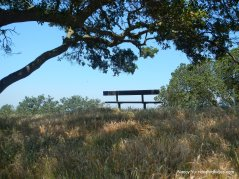 vista point bench