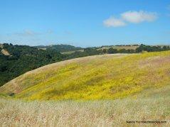 mustard slope
