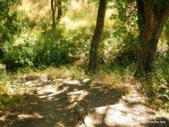 nature trail to bridge