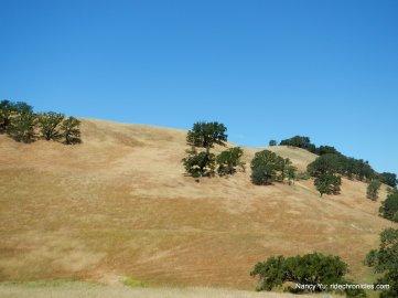 pale gold hills