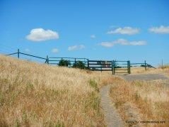 unsigned trail to briones mt diablo trail