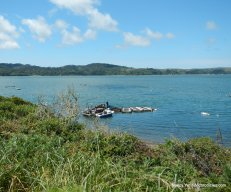 tomales bay oyster farm