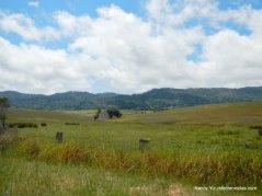 tomales bay trailhead area