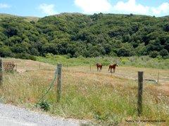 pt reyes petaluma rd-black mtn ranch