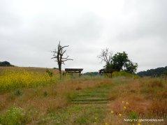 homestead picnic area