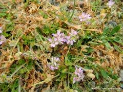 pink/lavender wildflowers