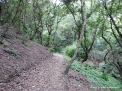 woodrat trail