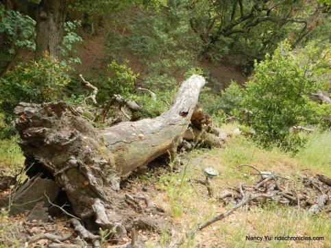 whipsnake trail