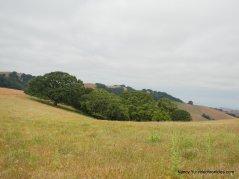 whipsnake trail-upper meadow