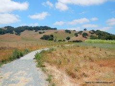 black phoebe trail