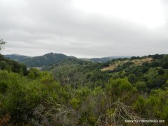 redwood rd views
