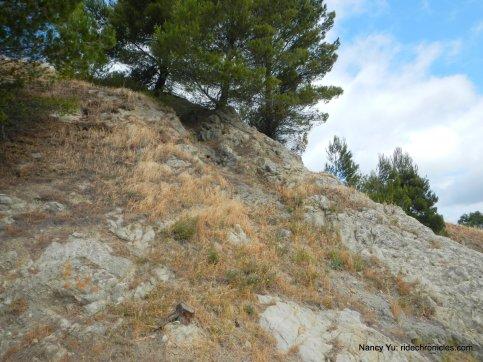 acalanes ridge