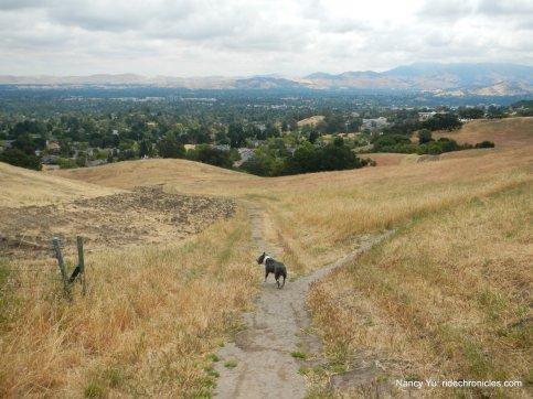 camino verde trail