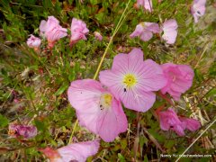 pink spring flowers