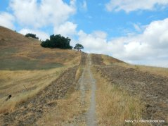 briones to mt diablo trail
