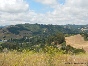 ridge top views-east bay hills