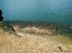 reedy shoreline-briones reservoir