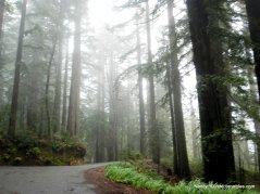 fairfax bolinas rd redwoods