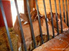 little farm animals