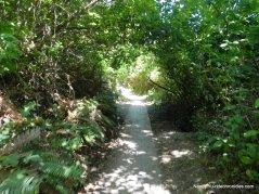 lower packrat trail
