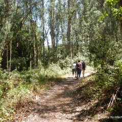 to wildcat peak trail