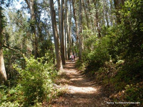 sylvan trail to peak trail