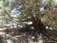rotary peace grove