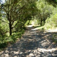 laurel canyon rd